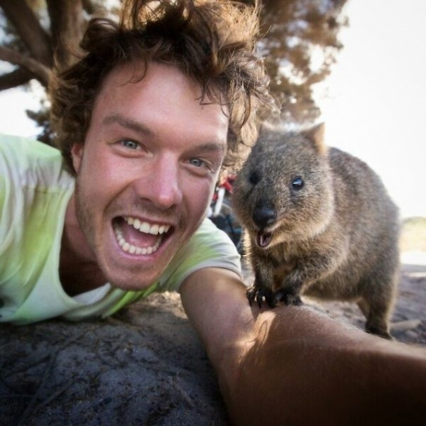 Quokka-selfie-cutest-trend-in-Australia-right-now11-600x600