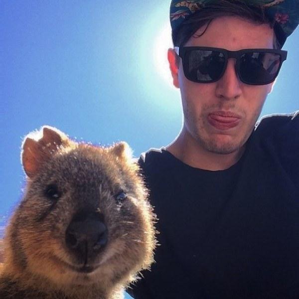 Quokka-selfie-cutest-trend-in-Australia-right-now18